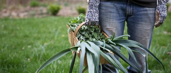 Organic Gardening Design - Lily White