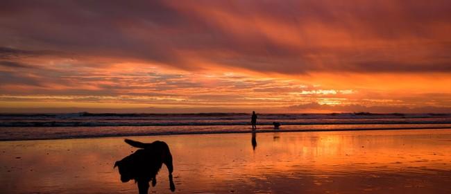 Photography Workshop - Sunset over Kohimarama