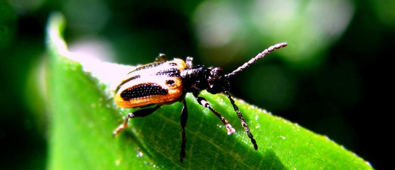 Biocontrol - Fighting Flora With Fauna