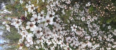 Herbal Harvesting