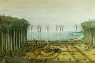 Image for event: Paradise Lost: Daniel Solander's Legacy