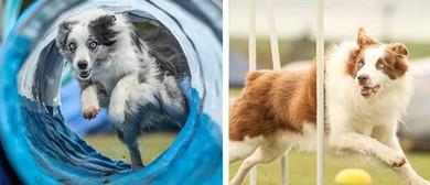 The Blackhawk New Zealand Dog Agility Championships