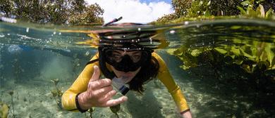 Whangateau Snorkel Day