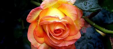 HVHS Rose and Bonsai Show
