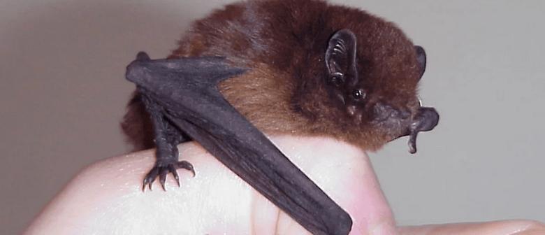 Long-tailed Bat/Pekapeka Tou Roa: Life, Flight and Plight