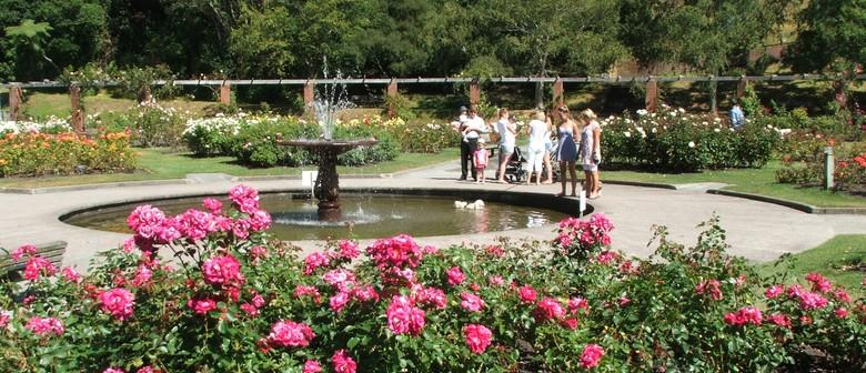 Picnic Tea in the Rose Garden