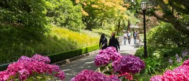 Midsummer Botanics