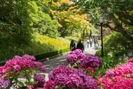 Autumnal Botanics