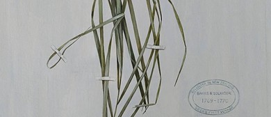 Botanical Drawing Workshop With Dr Tabatha Forbes