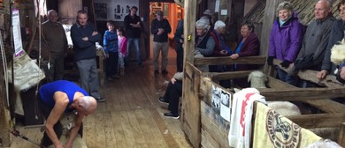 The Wool Shed Museum