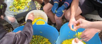 Calendula Cream Making Workshop