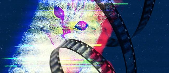 Cat Video Fest 2020