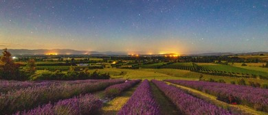 Martinborough Star Gazing and Pick Your Own Lavender