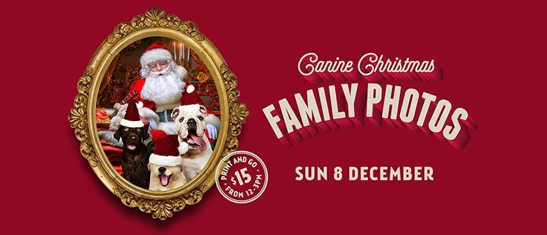 Canine Christmas Family Photos