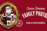 Image for event: Canine Christmas Family Photos
