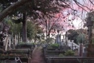 Napier Hill Cemetery Tours - Summer 2020
