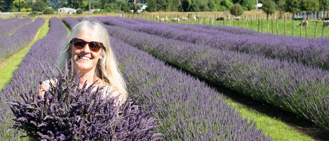 Pick Your Own Lavender 2020