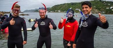 Taputeranga Community Snorkelling Day