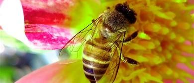 Bee a Hero