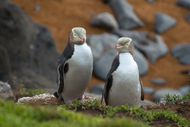 Otago Wildlife Masterclass Workshop - 4 Days