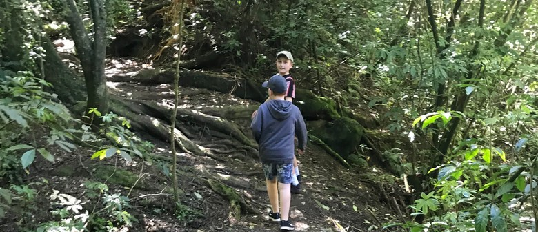 Explore Talbot Forest with South Canterbury Museum