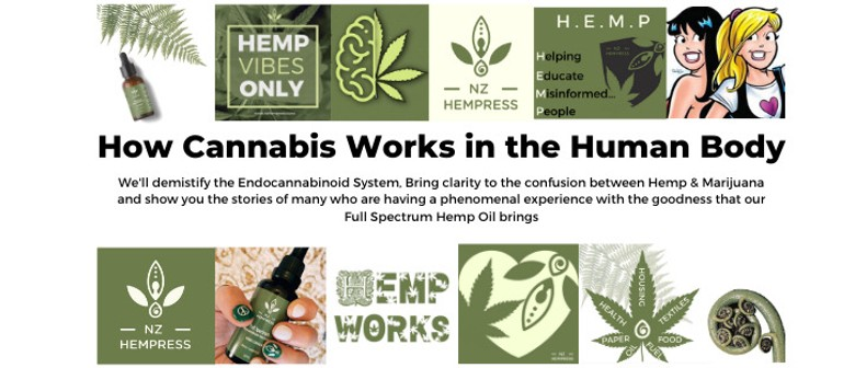 How Cannabis Works In the Human Body