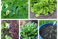 Salad and Herbs in Small Spaces
