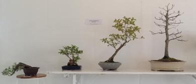 Auckland Bonsai Society Annual Show
