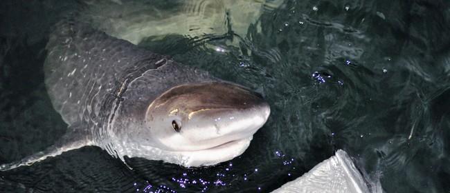 Shark Spy