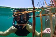 Kai Iwi Snorkel Day