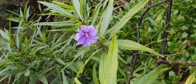 First Light Flower Essences of New Zealand Weekend Courses