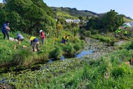 Taupo Swamp - Weeding Days