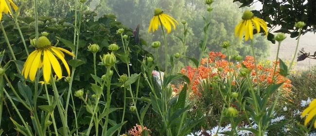 Villaleigh Plants Garden and Nursery Open Days