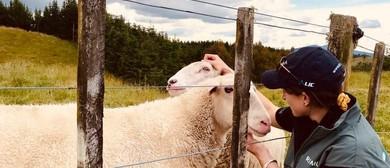 Open Farms Day