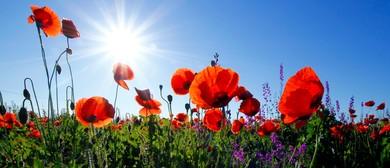 Anzac Day Service - Marlborough Sounds: CANCELLED