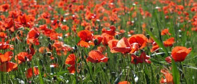 Anzac Day Service - Renwick: CANCELLED