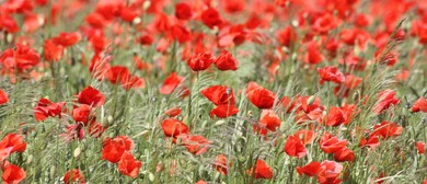 Anzac Day Service - Havelock: CANCELLED