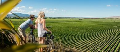 Vineyard Cycle Tour