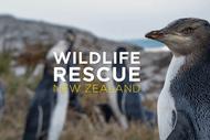 Wild Movies – Wildlife Rescue NZ – Penguin Tsunami: CANCELLED