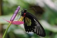 Wild Tropics: CANCELLED