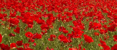 Kids Crafts: Make Your Own Poppy for ANZAC Day: CANCELLED