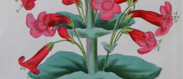 Antique Botanicals - An Exhibition of Original Book Plates