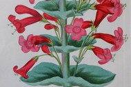 Antique Botanicals - An Exhibition of Original Book Plates