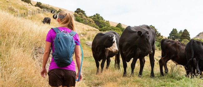 Banks Peninsula Adventure Race 2020