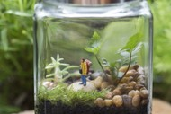 How to Make Your Own Closed Terrarium
