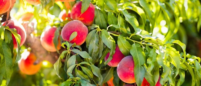 Caring For Your Fruit Trees Workshop