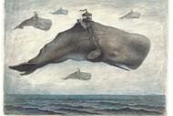 The Curious Evolution of the Flying Whale