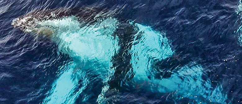 Wonderful Whales of Aotearoa
