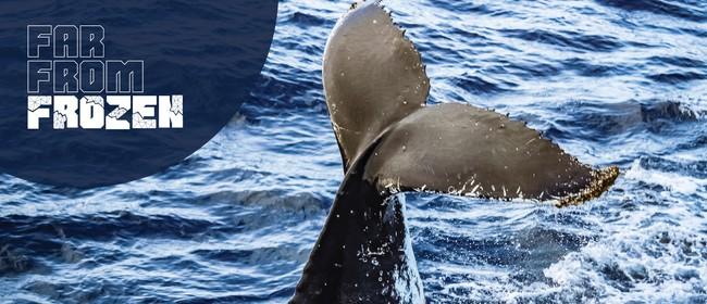 Far From Frozen – A Splash of Whale Science