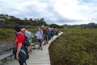 Kororareka Oyster Walk - Walk 1